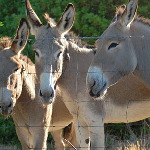Surroundings: Our donkeys